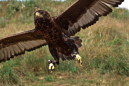 It's time to watch gold like a hawk: NYSE trader